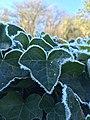 Frozen but still bumping Heart.jpg