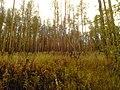 G. Novouralsk, Sverdlovskaya oblast', Russia - panoramio (147).jpg