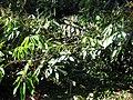 Gardenology.org-IMG 1121 rbgs10dec.jpg