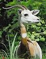 Gazella Dama 2006 09b.jpg