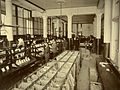 General Post Office mail sorting room, Wellington c.1900s.jpg