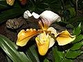 Genova-Euroflora-Orchidea-DSCF6521.JPG