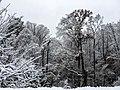 Georgia snow IMG 4461 (38060540695).jpg