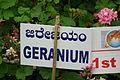 Geranium at lalbagh7376.JPG