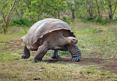 Rùa khổng lồ