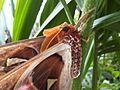 Giant moth 2.jpg
