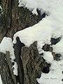 Gilau, Romania - panoramio (1).jpg
