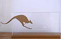 GoldenesKänguru.jpg