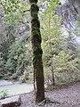 GorgesJogne-arbremoussu-3.jpg