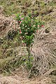 "Gradina Botanica ""Vasile Fati"" (4660544331).jpg"