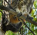 Great Horned Owl feet - Andrea Westmoreland.jpg