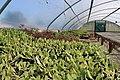 Greenhouse Plants (32999762142).jpg