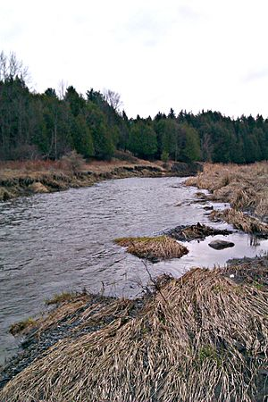 Green's Creek (Ontario) - Green's Creek in early spring