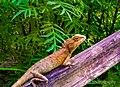 Ground lizard.jpg
