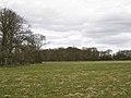 Groves, Wroxall Abbey park - geograph.org.uk - 1775915.jpg