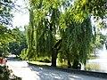 Grudziądz - Park Leśny - panoramio (8).jpg