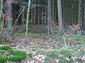 Hügelgrab Gemarkung Irmenach Nähe Wasserwerk Bild02.JPG
