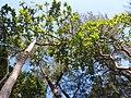 HK CWB 銅鑼灣 Causeway Bay 維多利亞公園 Victoria Park tree trunk n green leaves December 2019 SSG 29.jpg