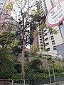 HK Mid-levels 香港半山 old Peak Road trees April 2020 SS2 04.jpg