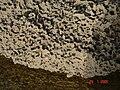 HaBonim-Dor beach reserve DSC00512.JPG