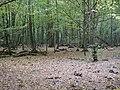 Hambach forest 07.jpg