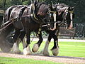 Hampton Court Palace (3037011645).jpg