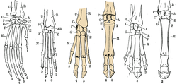Six hand skeletons