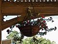 Hanging Petunias (32854090666).jpg