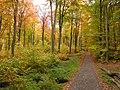 Hardtwald Herbst.jpg