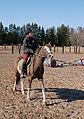 Harjoittelua Castellon esteratsastuskilpailuissa.jpg