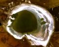 Harney Lake.png