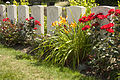 Hedge Row Trench Cem.8 1.JPG