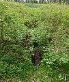 Hennequelle im Naturschutzgebiet Quellgebiet der Henne.jpg