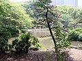 HibiyaPark200505-3.jpg