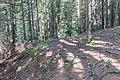 Hiking path in Saint-Jean-d'Aulps 03.jpg