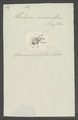 Hilipus - Print - Iconographia Zoologica - Special Collections University of Amsterdam - UBAINV0274 029 04 0099.tif