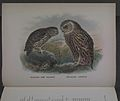 History of the birds of NZ 1st ed p016-2.jpg