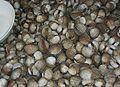 Hoi kraeng-หอยแครง893.jpg