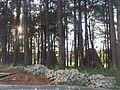 Holambra - panoramio.jpg
