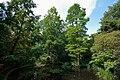 Holland park august 09.jpg