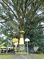 Holy tree Pura Tirta Empul.jpg