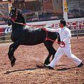 HorseTexcoco9.JPG