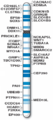 Human chromosome 12 with ASD genes from IJMS-16-06464.png