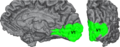 Human visual cortex V1 cropped.png