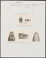 Hydrophis fasciatus - - Print - Iconographia Zoologica - Special Collections University of Amsterdam - UBA01 IZ11800145.tif