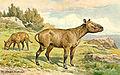 Hyracodon.jpg
