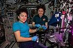 ISS-61 Jessica Meir and Christina Koch work inside the Columbus lab.jpg