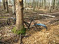 I found my bike^ - geograph.org.uk - 1587344.jpg
