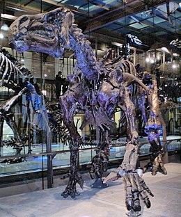Carbon dating kan niet worden gebruikt om de leeftijd van de dinosaurus fossielen te bepalen, omdat
