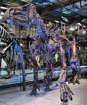 Iguanodon - I. bernissartensis mounted in modern quadrupedal posture, Royal Belgian Institute of Natural Sciences, Brussels